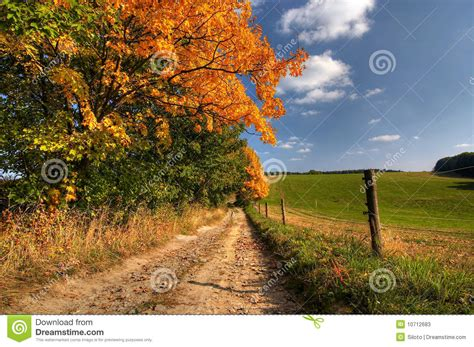 country road  autumn trees stock  image