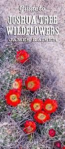 Joshua Tree Wildflowers Guide  U2022 James Kaiser