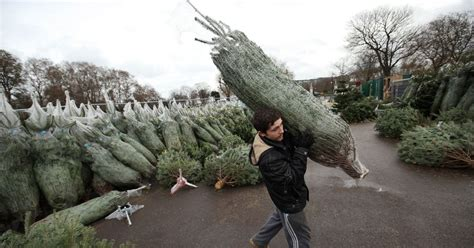 real christmas trees glasgow where to buy a real 6ft christmas tree in glasgow for a 4259