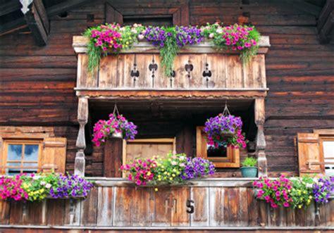 balkon blumen hängend balkonblumen viel sonne balkonblumen i sommerblumen