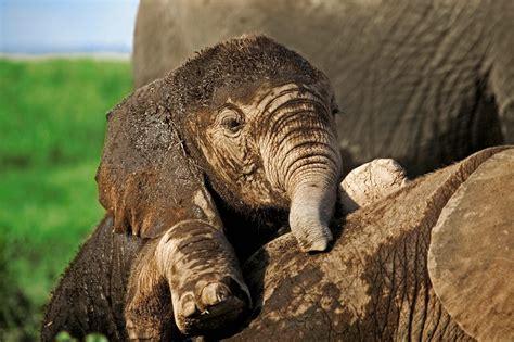 Elephant Hd Pictures Hd Desktop Wallpapers 4k Hd