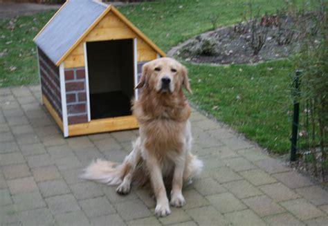 hundehütte selber bauen flachdach hundeh 252 tte selber bauen