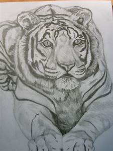 How to draw chinese tiger