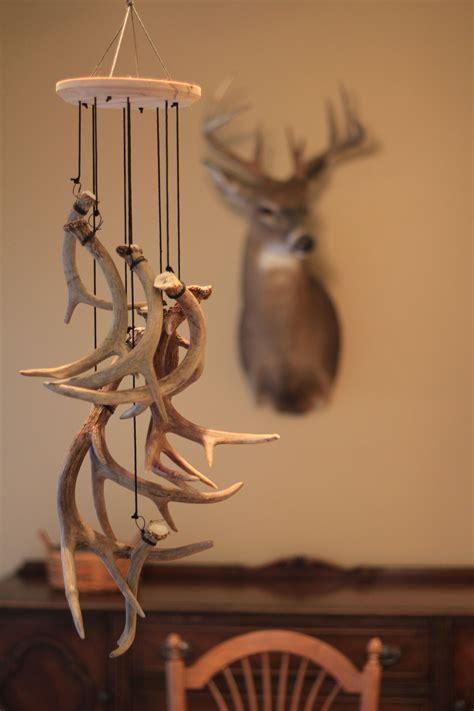 shed hunter    antlers
