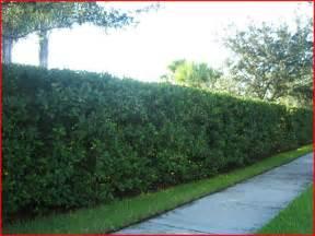 master bathroom design ideas viburnum hedge hedges for privacy