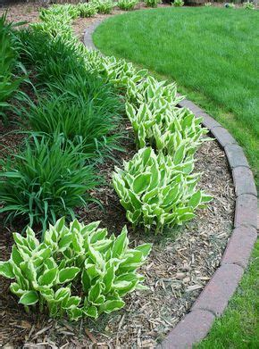 hostas daylilies backyard ideas backyard landscaping