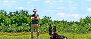 austin dog training dog trainers austin tx precision With precision dog training
