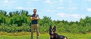 Austin dog training dog trainers austin tx precision for Precision dog training