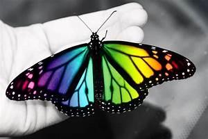 real butterflies - Google Search   Tattoos   Pinterest ...