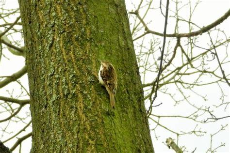 Vogel klettert am Baum  Bad Arolsen myheimatde