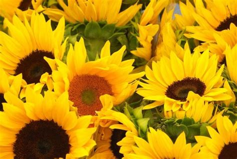 wur bloemen teelt de grond uit zomerbloemen en vaste planten wur