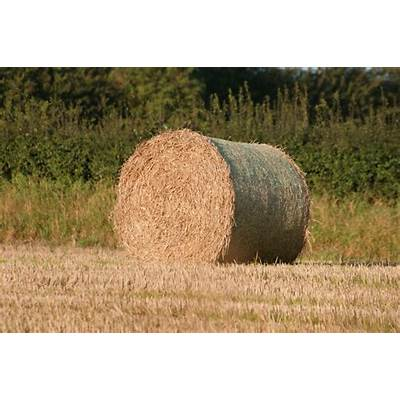 cost of a bale hay f--f.info 2017