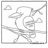 Colouring Australian Kookaburra Animals Coloring Australia Pages Aboriginal Brisbane Drawing Activities Animal Templates Bird Brisbanekids Printable Sheets Craft Template Birds sketch template