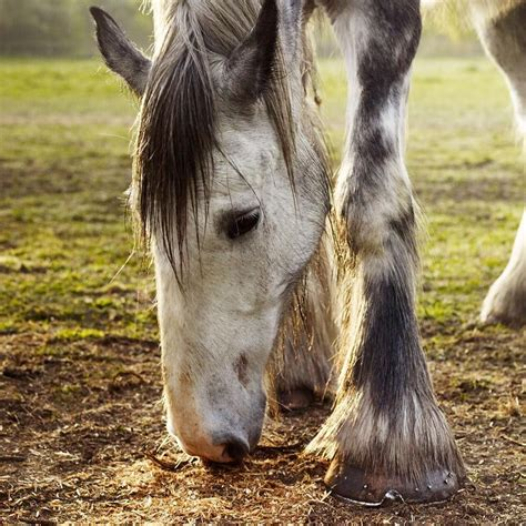 country living shire horses horse