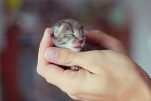 tiny cats smallest animals in the world images 2012 pets