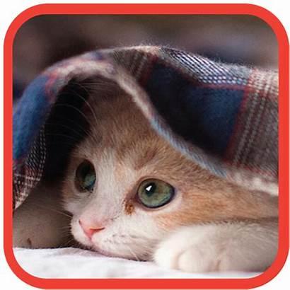Cat Lock Screen Why