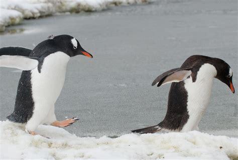 Antarctica Birds