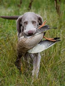Hunting Dog Quotes. QuotesGram