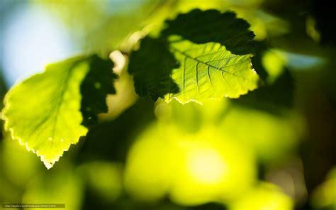 fond d 馗ran de bureau tlcharger fond d 39 ecran fond widescreen vert arbre fonds d 39 ecran gratuits pour votre rsolution du bureau 1920x1200 image 565676