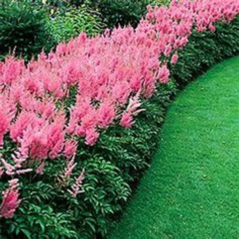 perennial border plants for sun top 10 flowers that bloom all year flower seasons of the year and shade perennials