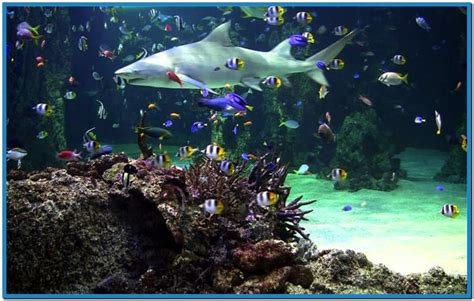 live fish screensaver free search engine at search