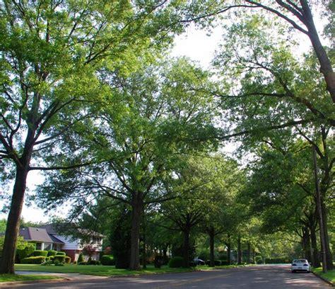 tree lined street garden city  york ny photo