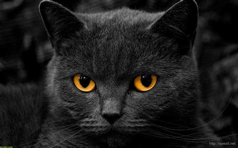 black cat face  eyes close  wallpaper hd background