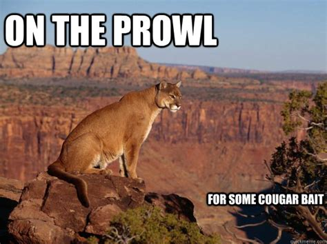 Cougar Memes - on the prowl for some cougar bait hide and seek cougar quickmeme