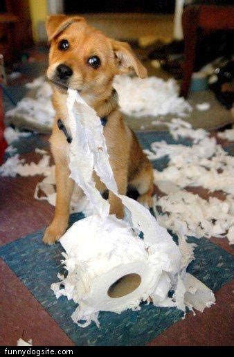 puppy making  mess funnydogsitecom