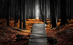Landscape, Nature, Forest, Mist, Path, Leaves, Fall