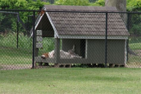 Hunde Im Garten Halten