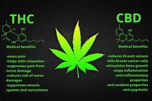 what is the difference between hemp cbd and marijuana cbd