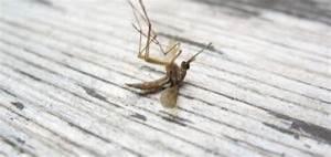 Mücken Bekämpfen Hausmittel : br chige n gel hausmittel gegen br chige finger und fu n gel ~ Articles-book.com Haus und Dekorationen