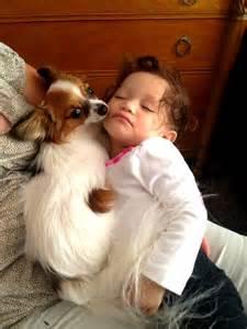 Baby Papillon Puppies