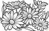 Coloring Daisies Colorear Printable Flower Dibujos Adult Daisy Margaritas Disegni Malvorlagen Nature Margherite Dibujo Supercoloring Imprimir Drawing Burning Wood Zeichnen sketch template