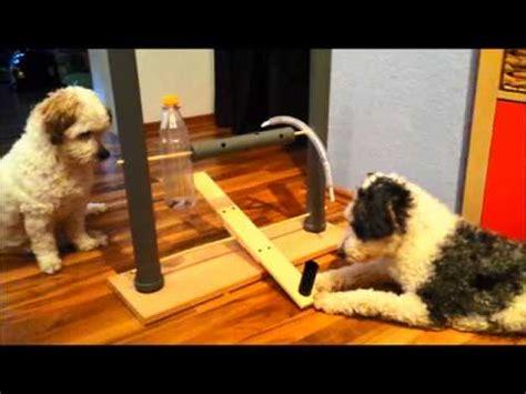 selbstgebautes intelligenzspielzeug fuer hunde