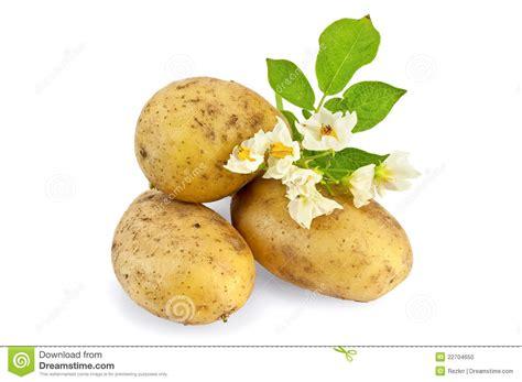 jaune de pomme de terre avec une fleur photo stock image