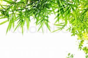 Green Bamboo leaf background - border design Stock Photo