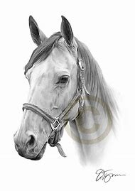 Horse Pencil Drawing Prints