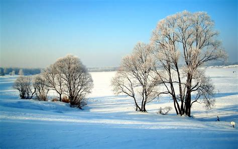 Free Winter Nature Wallpapers  Wallpaper Cave