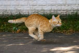 fast cat 8 amazing did you facts about cats goodnet