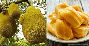 What Are the Benefits of Jackfruit?