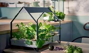 El huerto hidroponico de ikea que te permite cultivar for 5 cultivos faciles para empezar un huerto en casa