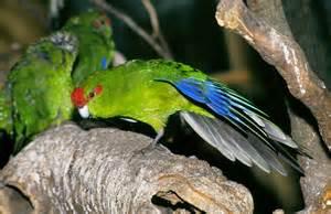 Native birds soar - thanks to 1080 | Stuff.co.nz