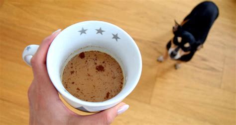 Dogs should never have coffee. What to Do If Your Cat or Dog Ingests Coffee   Healthcare ...