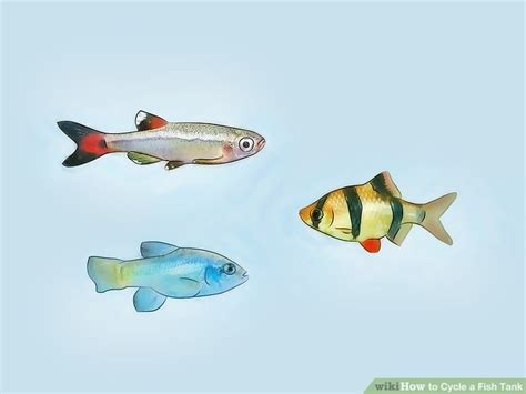 cycle  fish tank  pictures wikihow
