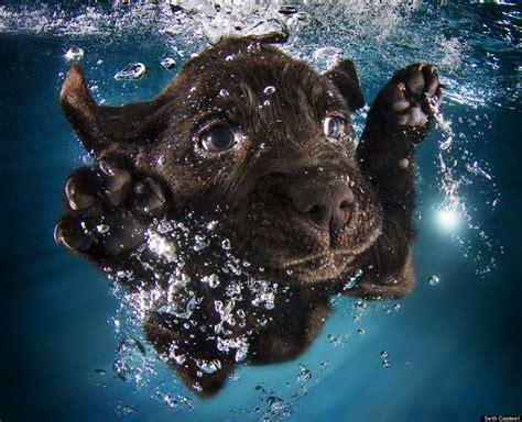 photographer taught  puppies  swim