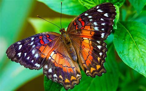 Video Hình ảnh Những Loài Bướm đẹp Nhất Thế Giới