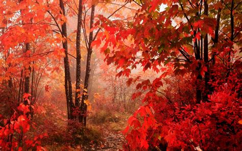 Beautiful Fall Backgrounds Hd by Leaves Beautiful Fall Landscapes Hd Wallpapers