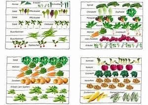 Gemüse Anbauen Plan : bildergebnis f r gem se anbauen plan garten anpflanzen ~ Watch28wear.com Haus und Dekorationen